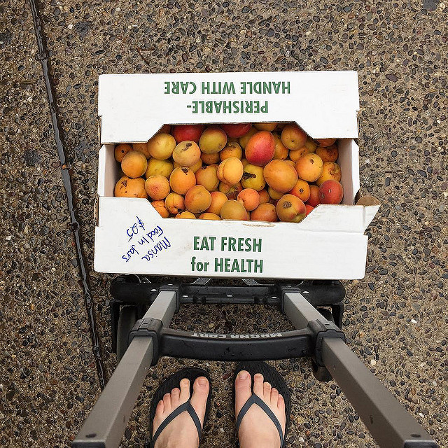It's apricot season! A half bushel is seconds is all mine!
