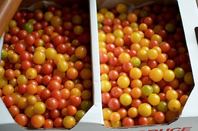 a flat of small tomatoes