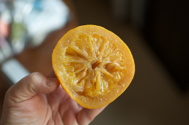 tender orange insides for small batch marmalade - Food in Jars