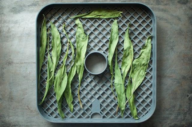 crisp ramp stems - Food in Jars