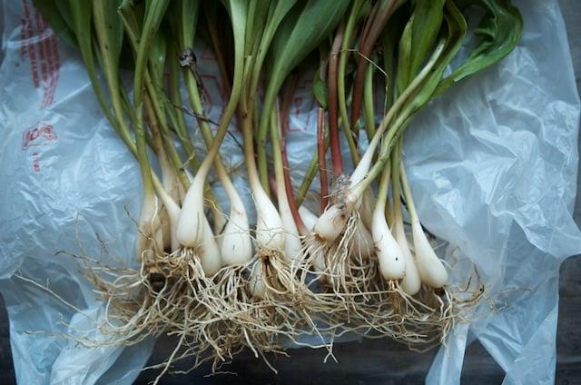 ramp roots - Food in Jars
