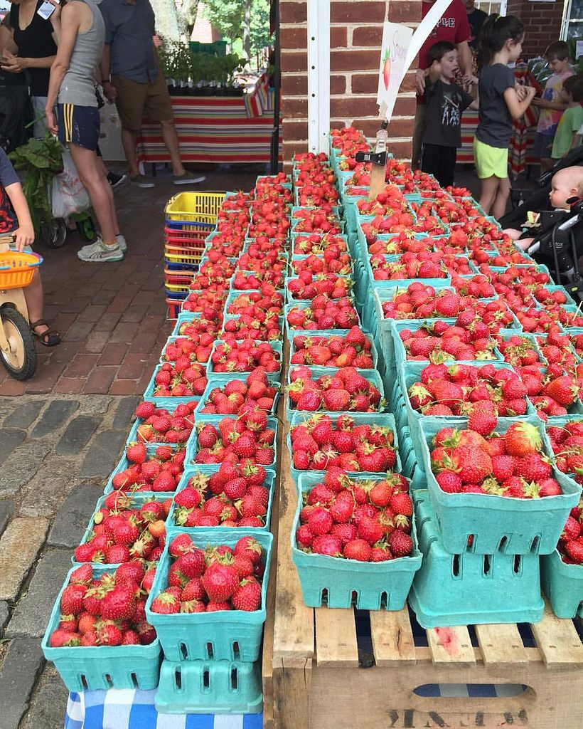 rows of strawberries