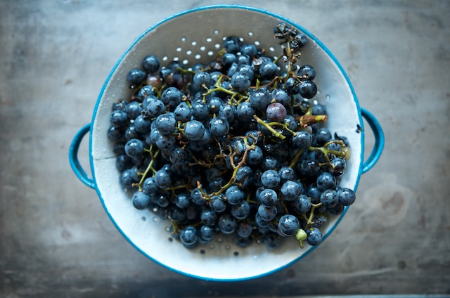 Concord grapes in a colander for Concord grape jelly