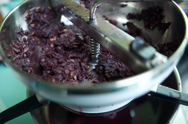 Concord grape pulp in a food mill for Concord grape jelly