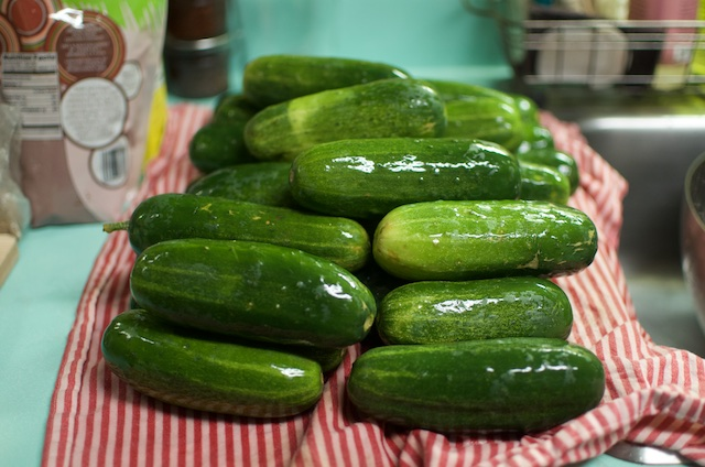 washed-pickling-cucumbers