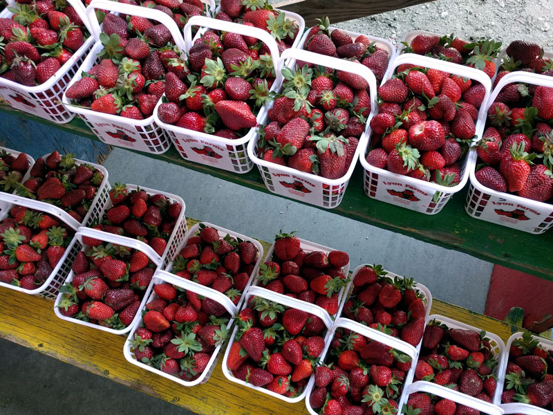 baskets of strawberries for quick pickled balsamic strawberries