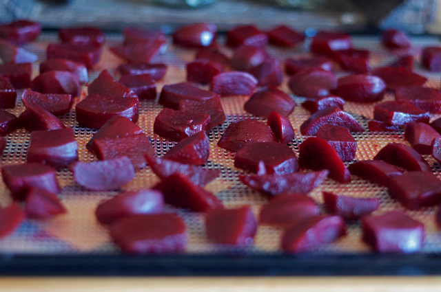 Side view of beet slices on a dehydrator tray for beet raisins.