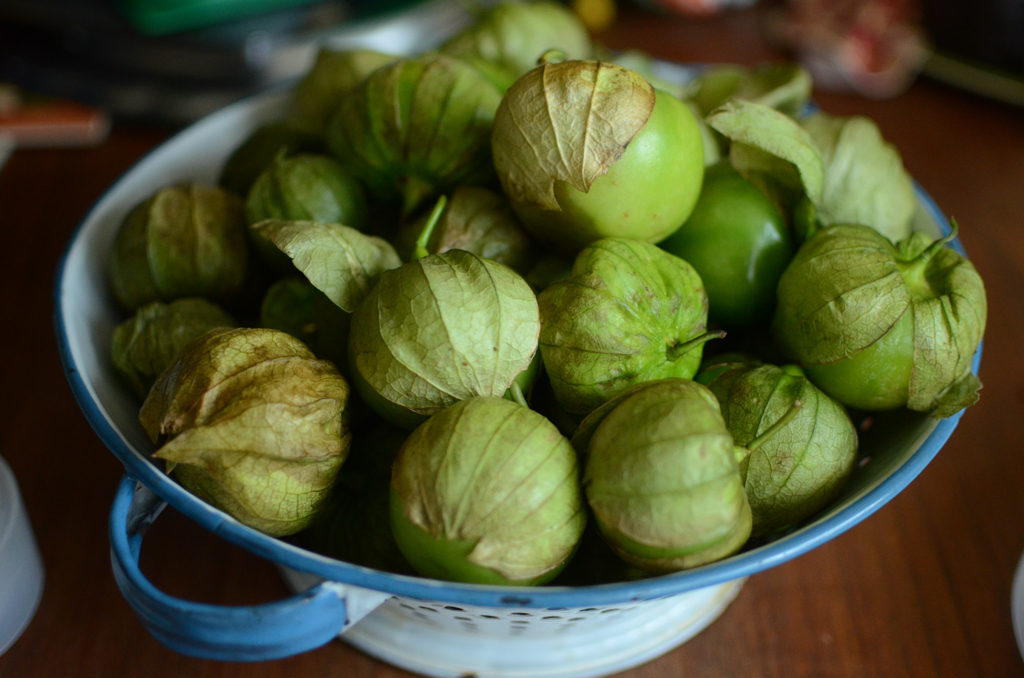 A blue and white colander filled with four pounds of husk-on tomatillos.