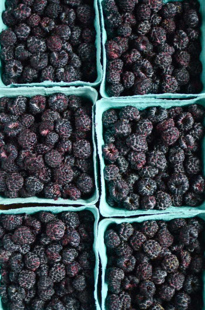 Six dry pints of fresh black raspberries.