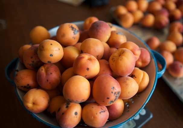 colander of apricot seconds