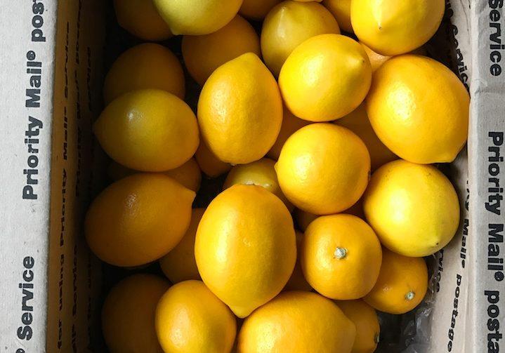 meyer lemons in a box